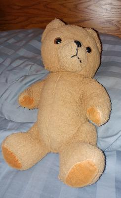 German yellow teddy