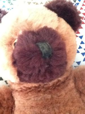 two tone teddy bear face