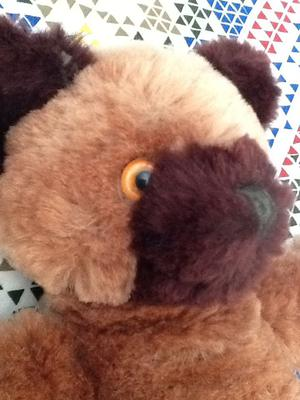 two tone teddy bear side face
