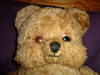 Weird looking bear face